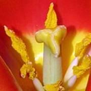 Tulips - Hearts Desire Art Print