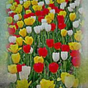 Tulips In A Field Art Print