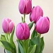 Tulips In Bloom Art Print