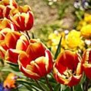 Tulips In Japan Art Print