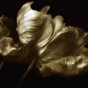 Tulips In Sepia Art Print