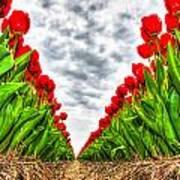 Tulips Part IIi Art Print