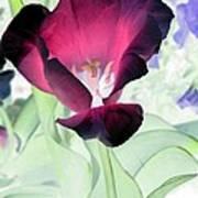 Tulips - Perfect Love - Photopower 2043 Art Print