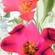 Tulips - Perfect Love - Photopower 2045 Art Print