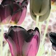 Tulips - Perfect Love - Photopower 2066 Art Print