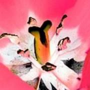 Tulips - Perfect Love - Photopower 2075 Art Print