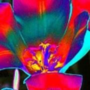 Tulips - Perfect Love - Photopower 2155 Art Print