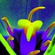 Tulips - Perfect Love - Photopower 2167 Art Print