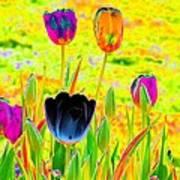 Tulips - Perfect Love - Photopower 2169 Art Print