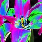 Tulips - Perfect Love - Photopower 2175 Art Print