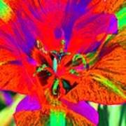 Tulips - Perfect Love - Photopower 2179 Art Print