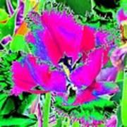 Tulips - Perfect Love - Photopower 2183 Art Print