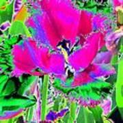 Tulips - Perfect Love - Photopower 2184 Art Print
