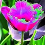 Tulips - Perfect Love - Photopower 2190 Art Print