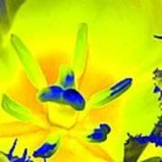 Tulips - Perfect Love - Photopower 2191 Art Print