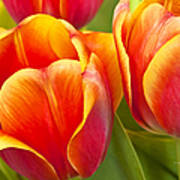 Tulips Red And Yellow Art Print