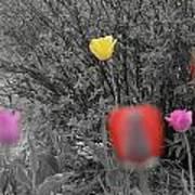 Tulips Reign Art Print