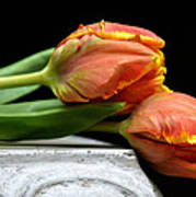 Tulips Together Art Print