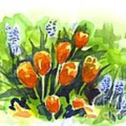 Tulips With Blue Grape Hyacinths Explosion Art Print