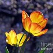 Tulips With Purple Bokeh Art Print