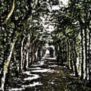 Tunnel Of Trees ... Art Print