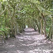Tunnel Of Trees Art Print