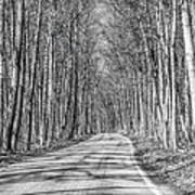 Tunnel Of Trees Black And White Art Print