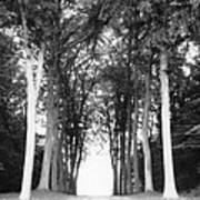 Tunnel Of Trees Art Print