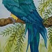Turk Macaw Art Print
