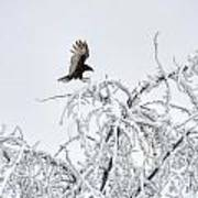 Turkey Vulture In The Snow Art Print