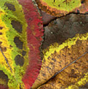 Turning Leaves 2 Art Print