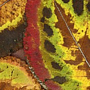 Turning Leaves 3 Art Print by Stephen Anderson