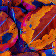 Turning Leaves 5 Print by Stephen Anderson