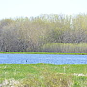 Turquoise Marsh Art Print