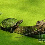 Turtle-190 Art Print