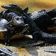 Turtle And Gator Love I Art Print