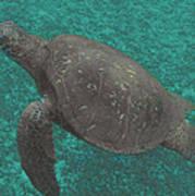 Turtle Ascending Art Print
