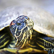 Turtle Art Print by Elena Elisseeva