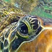 Turtle Eye Art Print