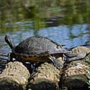 Turtle Float Art Print