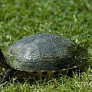 Turtle Grass Art Print