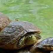 Turtle Ninjas Art Print