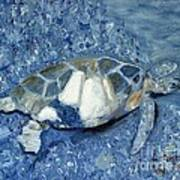 Turtle On Black Sand Beach Art Print