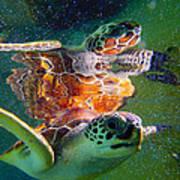 Turtle Reflection Art Print