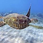 Turtle Underwater 3 Art Print