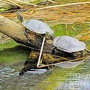Turtles At The National Zoo Art Print