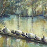 Turtles On A Log Art Print