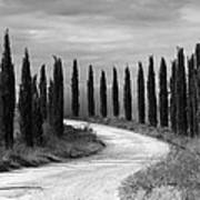 Tuscan Cedars Art Print