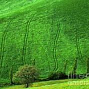 Tuscan Hills 05 Art Print by Giorgio Darrigo
