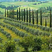 Tuscan Panoramic 3 Art Print